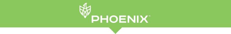 phoenix-oasis-lp-header